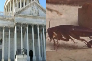 More Popular Than Congress: Cockroaches, Traffic, Root Canals