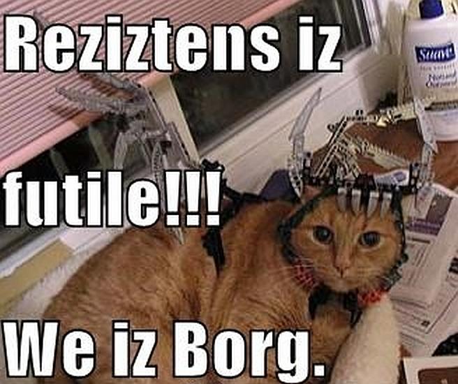 Kitteh Borg